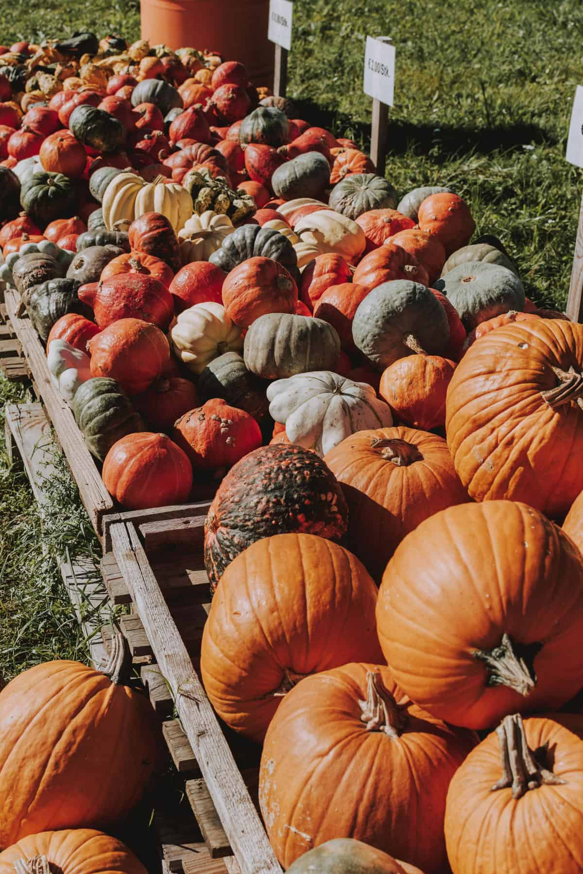 Variety of different pumpkins in large wooden crates for sale at a farmstand.